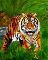 36 Tigerred.jpg - 13275 Bytes